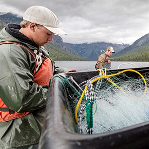 Intern works as part of Quartz Lake Fish Project.