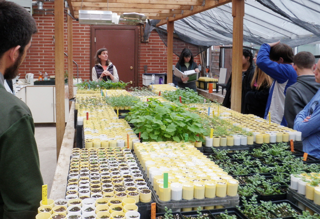 Students learn about propagation and maintenance of native plants in Columbia Falls High School Cooperative Greenhouse