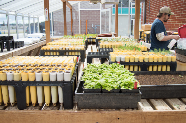 Propagation Specialist waters seeds at Columbia Falls High School Cooperative Greenhouse