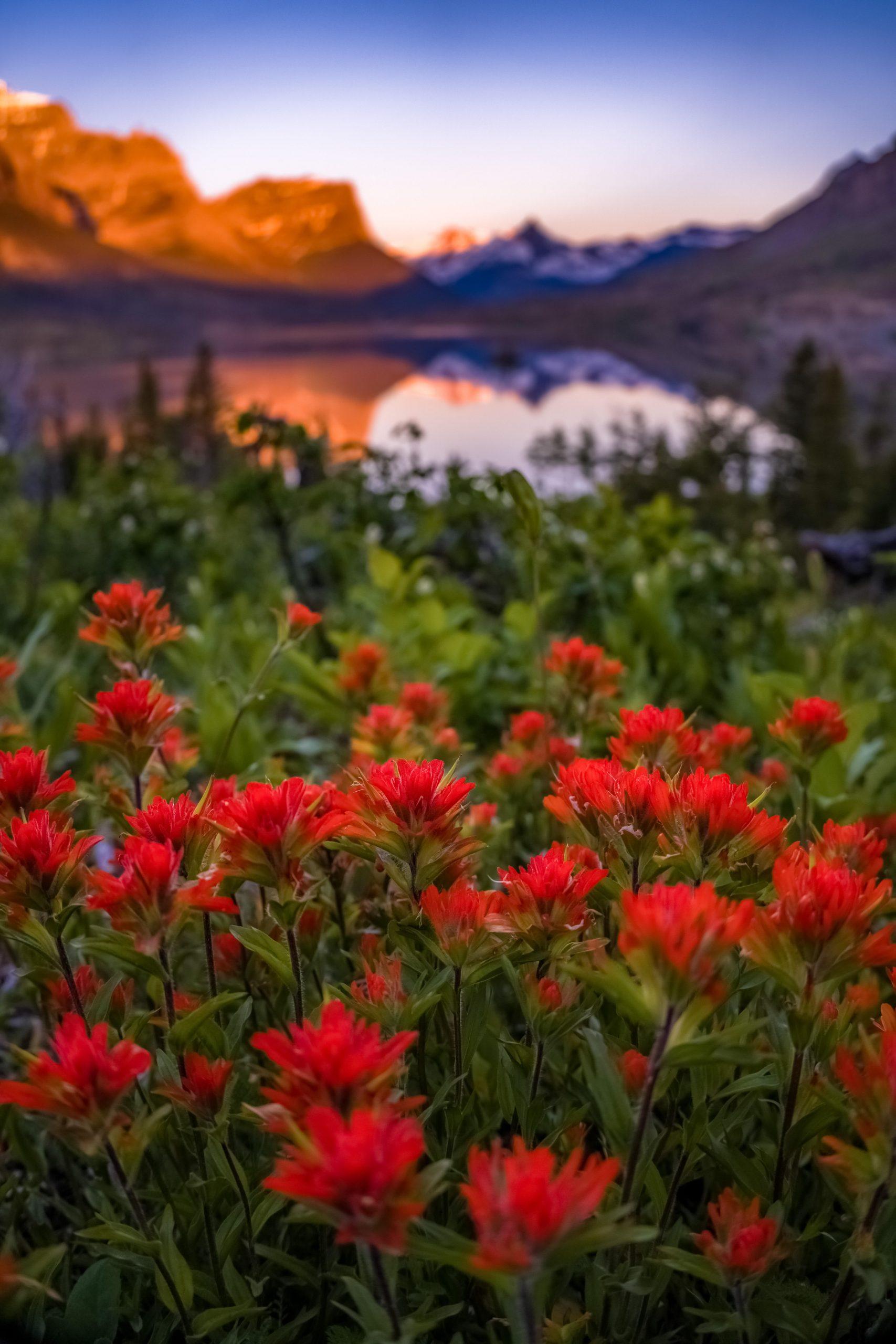 Bright orange Indian Paintbrush flowers illuminate in the foreground of a mountainous alpine lake during sunrise, photo credit: Joshua Lewis