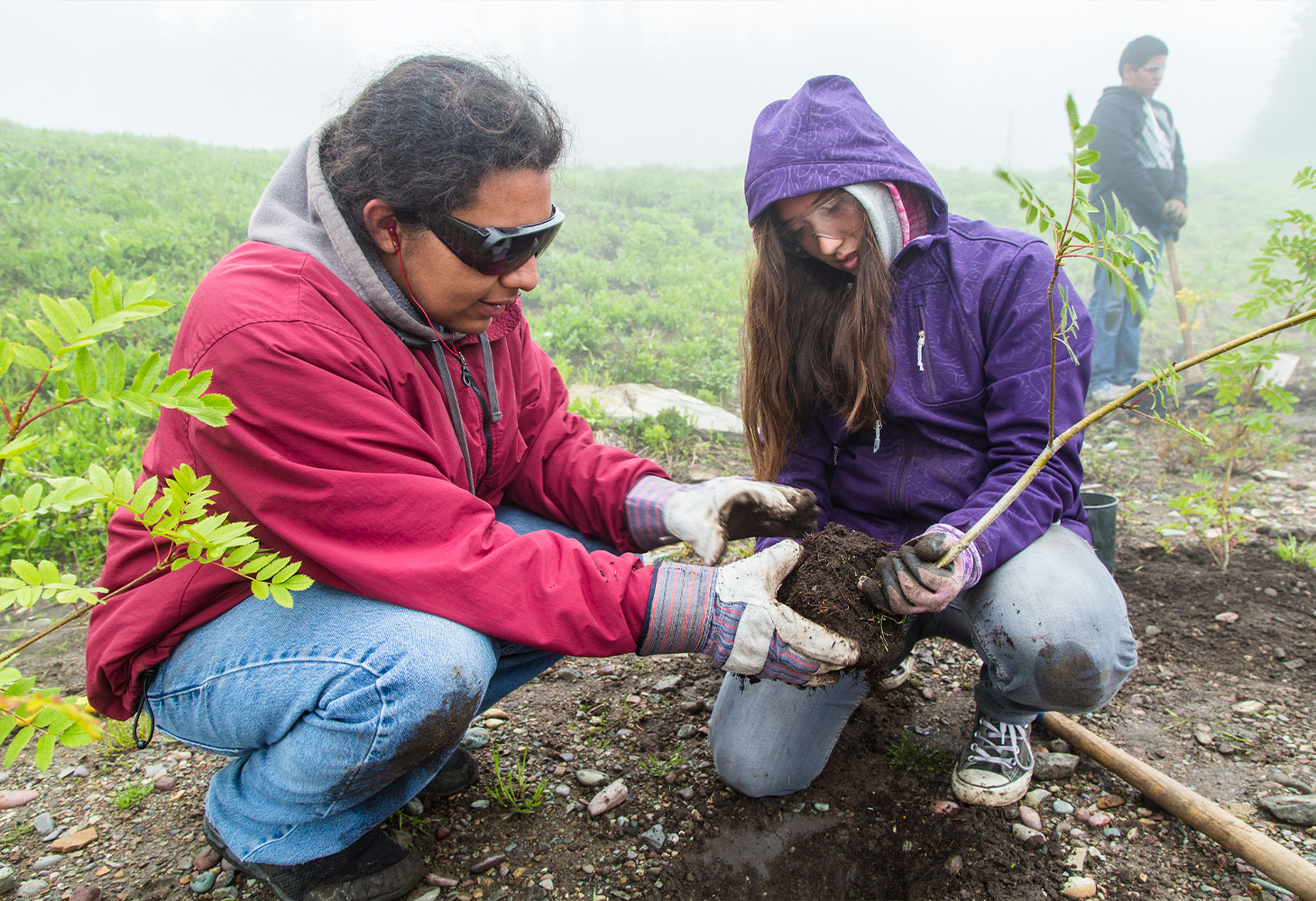 A student helps plant native plants in Glacier National Park