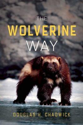 Wolverine walking