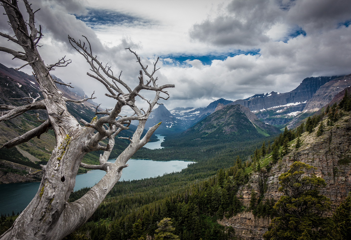 A dead whitebark pine tree with bare, gnarled branches stands in contrast to a striking mountainous landscape in Glacier National Park