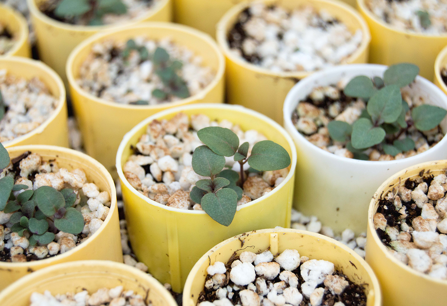 Small seedlings are nurtured at the Columbia Falls High School Cooperative Greenhouse