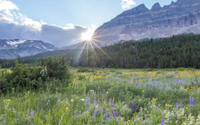 Protecting Native Plants In Glacier National Park