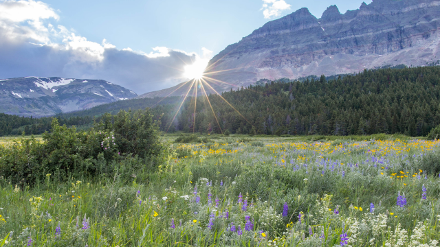 The sun peaks over a mountain range with bright purple wildflowers in the foreground