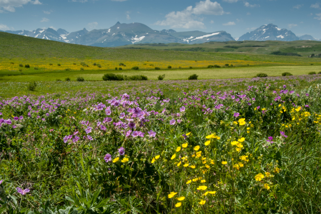 Grassy hillside with flowers in front of mountains.