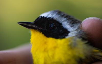 Program Assists In Bird Conservation In Glacier National Park