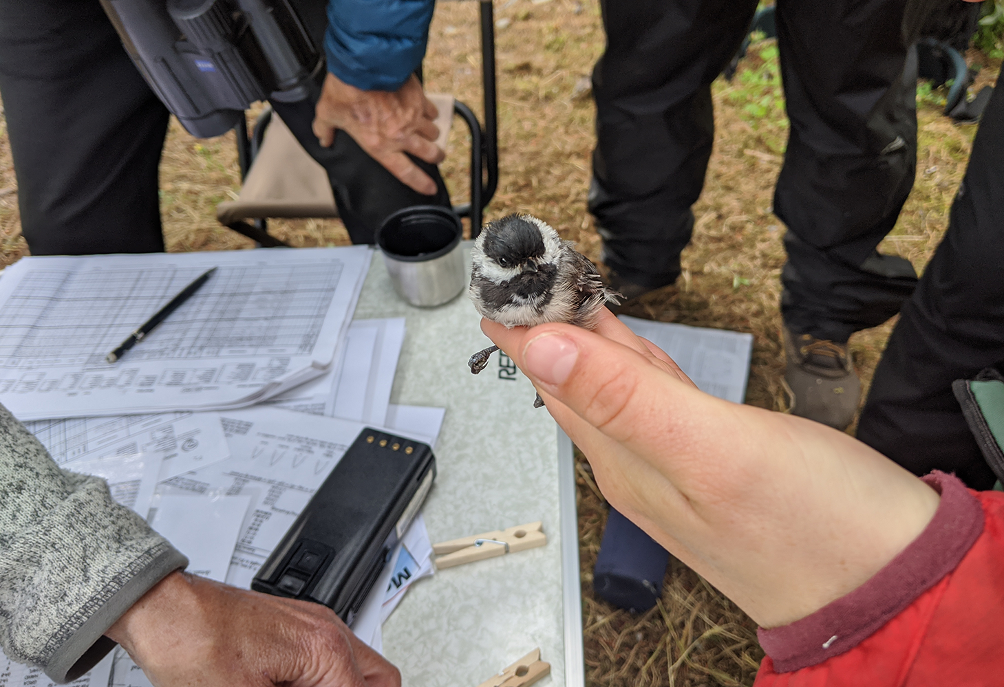 A hand holds a small bird during a research study on wildlife in Glacier National Park